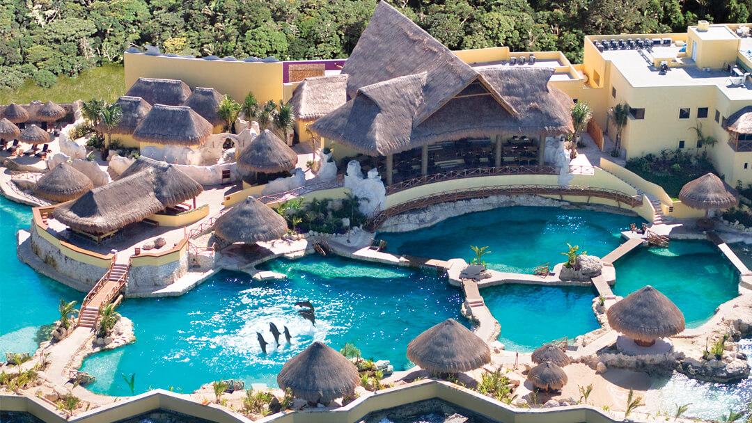 ¡Nada con delfines en Cozumel!