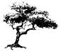 Acacia Systems logo