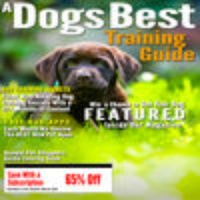 A Dogs Best Training Guide
