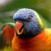 200+ Birds Ringtones