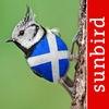All Birds Scotland