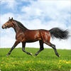 Horselog