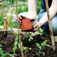 Gardening Tips: Learn How To Plant A Garden
