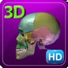 3D Medical Human Skeleton Skull HD