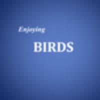 Enjoying BIRDS