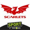 Scarlets Rugby by Sport RightNow