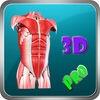 3D Human Body Muscle_HD