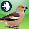 Birds of Britain and Ireland (Pro Edition)