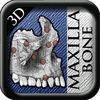 3D Maxilla Bone