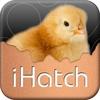 iHatch