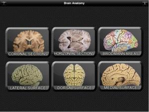 Screenshot Brain Anatomy on iPad