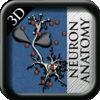 A Neuron Anatomy