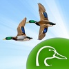 Ducks Unlimited Waterfowl Migration App