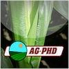 Crop Nutrient Deficiencies