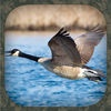 Goose Hunting Calls