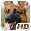 German Shepherd Simulator HD Animal Life