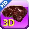 3D Human Liver HD