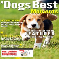 A Dogs Best Moments