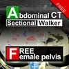 Abdominal CT Sectional Walker Lite