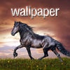 HD Horse Wallpapers and Backgrounds