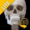 Skeletal System Lite