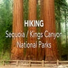 Hiking Sequoia