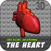 All Kids Anatomy The Heart