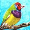 The Birding Log for iPad
