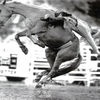 BEST OF RODEOS