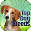 Dog Breeds Pet Finder Paid