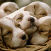 Dog Breeds Catalog
