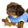 Puppies Adorable Wallpapers for new iPad