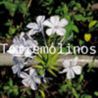 Torremolinos Offline Map by hiMaps