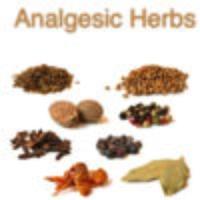 Analgesic Herbs