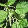 Garden Plants Database