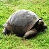 Galapagos Wildlife Guide