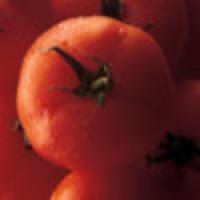 Tomato MD