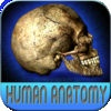 Atlas Of Human Anatomy HD