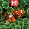 Aquarium live HD Wallpapers