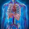 Human Anatomy Position