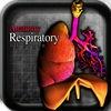 Anatomy Respiratory 3D Organs vi
