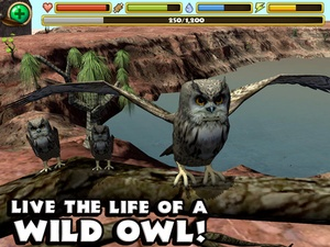 Screenshot Owl Simulator on iPad
