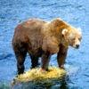 North America Wildlife Guide
