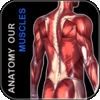 Anatomy Our Muscles