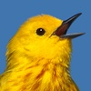 BirdTunes