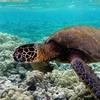 Underwater Species Wallpapers