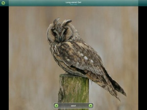Screenshot Birds of Britain and Ireland (Pro Edition) on iPad