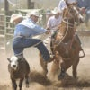 CALF AND STEER ROPERS