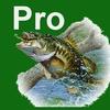 Bass Fishing Guru Pro