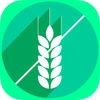 Grain or No Grain